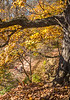 Katy Trail near Rocheport, Missouri - 11-9-13 - C1-0396 - 72 ppi-3