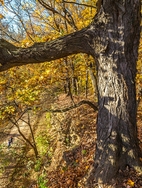 Katy Trail near Rocheport, Missouri - 11-9-13 - C1-0461 - 72 ppi-3