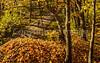 Katy Trail near Rocheport, Missouri - 11-9-13 - C2-0095 - 72 ppi-3