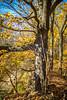 Katy Trail near Rocheport, Missouri - 11-9-13 - C1-0314 - 72 ppi