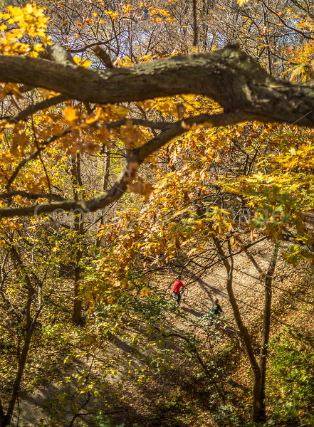 Katy Trail near Rocheport, Missouri - 11-9-13 - C1-0380 - 72 ppi