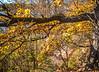 Katy Trail near Rocheport, Missouri - 11-9-13 - C1-0396 - 72 ppi-2