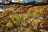 Katy Trail near Rocheport, Missouri - 11-9-13 - C1-0429 - 72 ppi