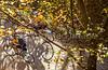 Katy Trail near Rocheport, Missouri - 11-9-13 - C1-0203 - 72 ppi