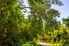 Cyclist(s) on Katy Trail, Rocheport to MKT turnoff for Columbia - C3-0253 - 72 ppi