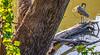 Meramec River bike route snaps _W7A0063-Edit - 72 ppi