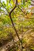 Katy Trail along Missouri River near Rocheport, MO - C2-0433 - 72 ppi