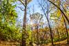 Trails near Missouri River west of St  Louis - C2-0321 - 72 ppi