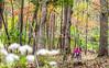 Trails near Missouri River west of St  Louis - C1-30544 - 72 ppi-3