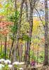 Trails near Missouri River west of St  Louis - C1-30544 - 72 ppi-2