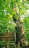 Big Oak Tree State Park, Missouri - 1 - 72 ppi