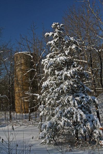 Snow-covered Cedar near an abandoned silo