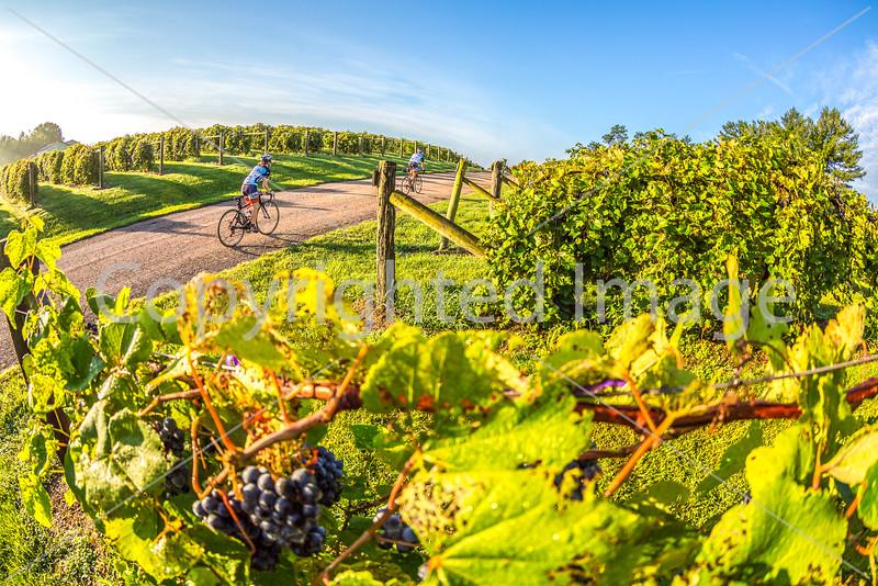 BikeMO 2016 - C2-0041 - 72 ppi