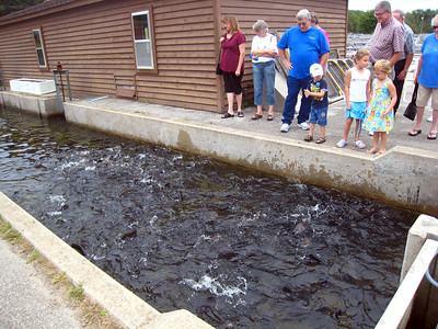 Shepherd of the Hills Fish Hatchery