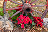 An old wagon wheel with poinsettia flowers at the Christmas Village decorted for the season in Branson, Missouri USA.