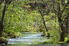 Alley Spring, Ozark Nat'l Scenic Riverways -0017 - 72 ppi