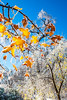 Ice storm - Missouri Botanical Garden - St  Louis-0211 - 72 ppi
