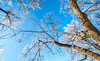 Ice storm - Missouri Botanical Garden - St  Louis-0130 - 72 ppi