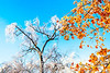 Ice storm - Missouri Botanical Garden - St  Louis-0200 - 72 ppi-3