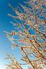 Ice storm - Missouri Botanical Garden - St  Louis-0008 - 72 ppi