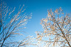 Midwest ice storm - St  Louis, Missouri-0035 - 72 ppi