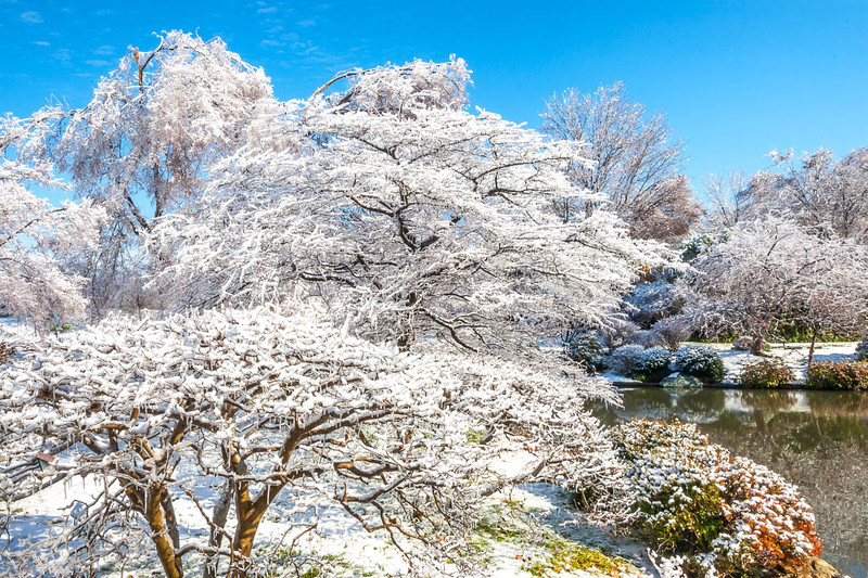 Ice storm - Missouri Botanical Garden - St  Louis-0233 - 72 ppi