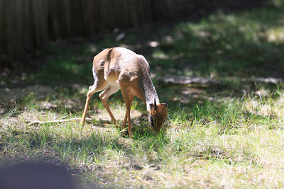 2015_08_20 Kansas City Zoo 013