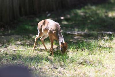 2015_08_20 Kansas City Zoo 013