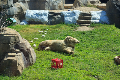 2015_08_20 Kansas City Zoo 001