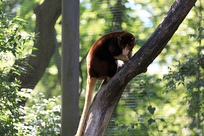 2015_08_20 Kansas City Zoo 005
