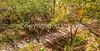 Katy Trail along Missouri River near Rocheport, MO - C2-0468 - 72 ppi