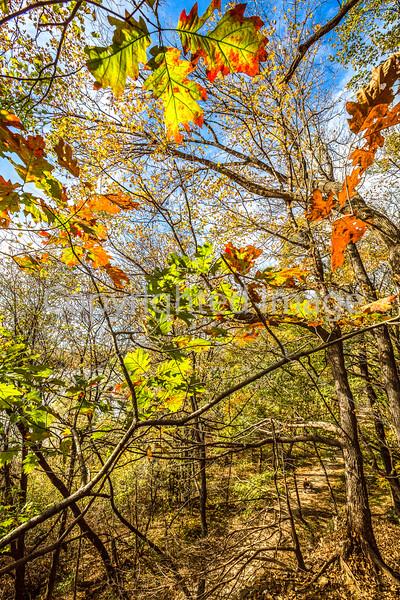 Katy Trail along Missouri River near Rocheport, MO - C2-0489 - 72 ppi