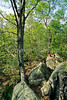 Hikers in Pickle Springs Natural Area, Missouri - 16 - 72 ppi