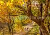 Katy Trail near Rocheport, MO - C1-0463 - 72 ppi