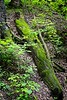 Ha Ha Tonka Karst Natural Area
