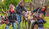 Reindeer, 2nd shoot - C2-0138 - 72 ppi-3