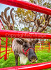 Reindeer, 2nd shoot - C2-0204 - 72 ppi-2