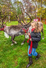 Reindeer, 2nd shoot - C2-0253 - 72 ppi-2