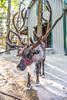 Reindeer - C3-30003 - Snowflake - 72 ppi