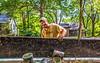 The GreenTurf Team - Mike, Cody, Charley - July 2017-30021 - 72 ppi