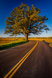 The McBaine Bur Oak near Columbia, Missouri. The famous 350-year-old behemoth is a sprawling gem in the Missouri River floodplains in southern Boone County.  Photo by Kyle Spradley | © Kyle Spradley Photography | www.kspradleyphoto.com