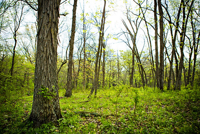 Spring woods at northwest Missouri.  Photo by Kyle Spradley | © Kyle Spradley Photography | www.kspradleyphoto.com
