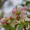 Spring Bloom on Tree