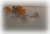 Fall Fog 812jpg _DSH6767