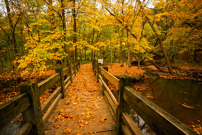 Fall colors at Rock Bridge State Park in Columbia, Missouri.  Photo by Kyle Spradley | www.kspradleyphoto.com