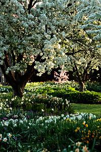 Spring at the Missouri Botanical Garden in St. Louis, Missouri.   Photo by Kyle Spradley | www.kspradleyphoto.com