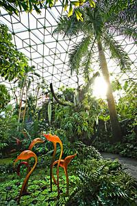 Inside the Climatron at the Missouri Botanical Garden in St. Louis.  Photo by Kyle Spradley | www.kspradleyphoto.com