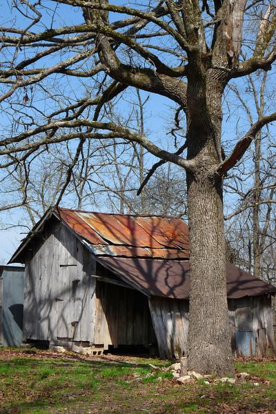 Old  Tree 812 P1060848
