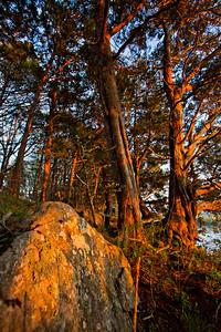 Missouri River Bluff Cedars