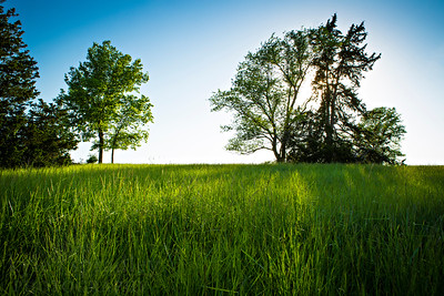 A central Missouri pasture in late spring evening sun.  Photo by Kyle Spradley | www.kspradleyphoto.com